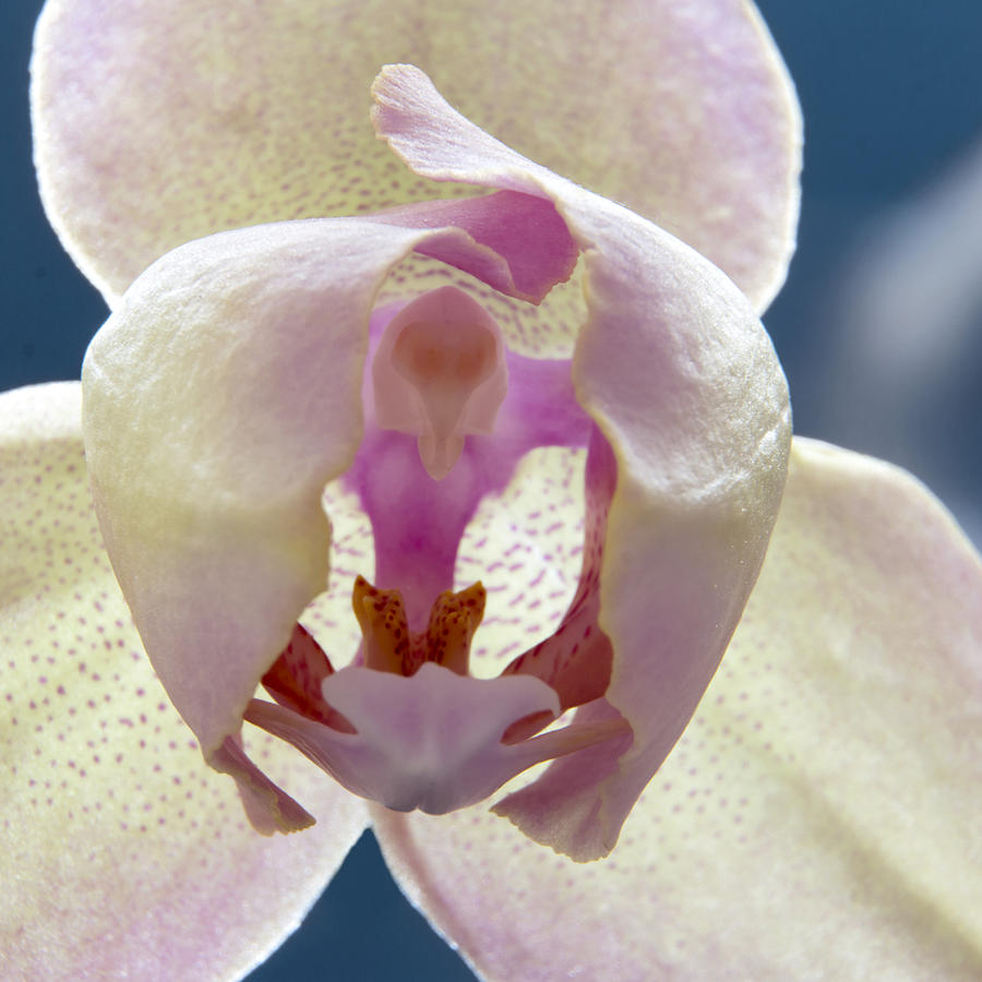 Orchids Photograph - Beautiful Orchid by Dana Moyer
