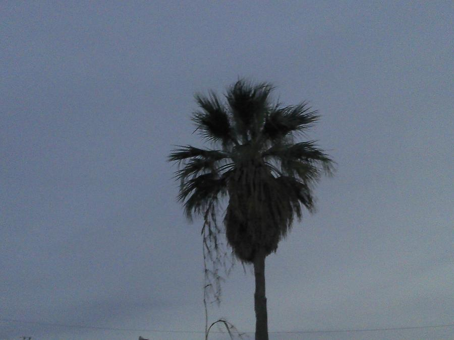 Palm Pyrography - Beautiful Palm Tree by Rebekah Luper