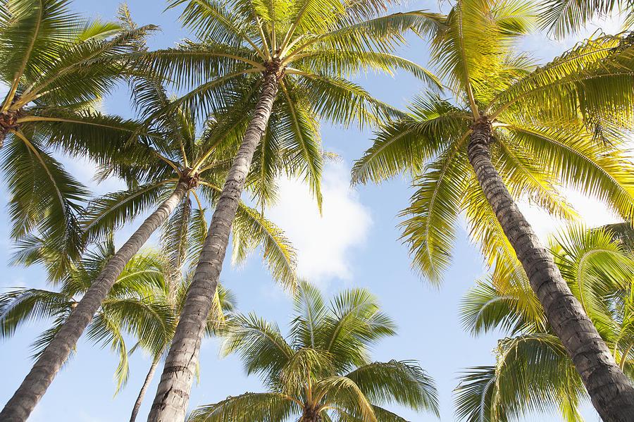 Blue Photograph - Beautiful Palms by Brandon Tabiolo