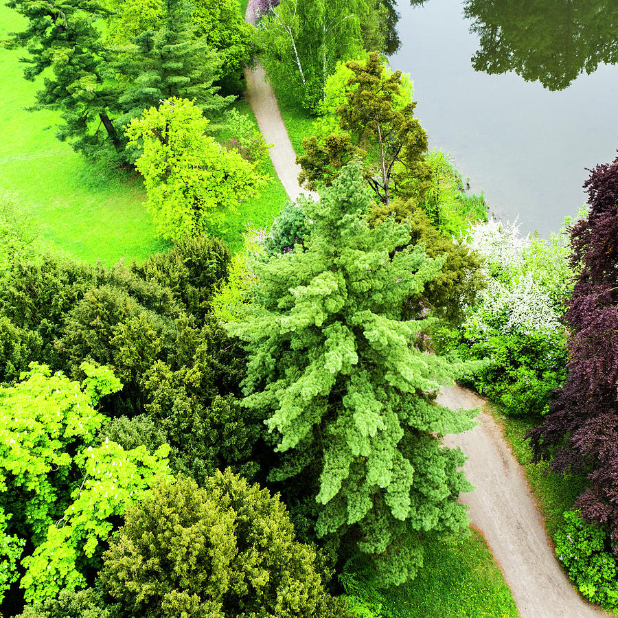 Beautiful Park With Trees, Grass Photograph by Domin domin