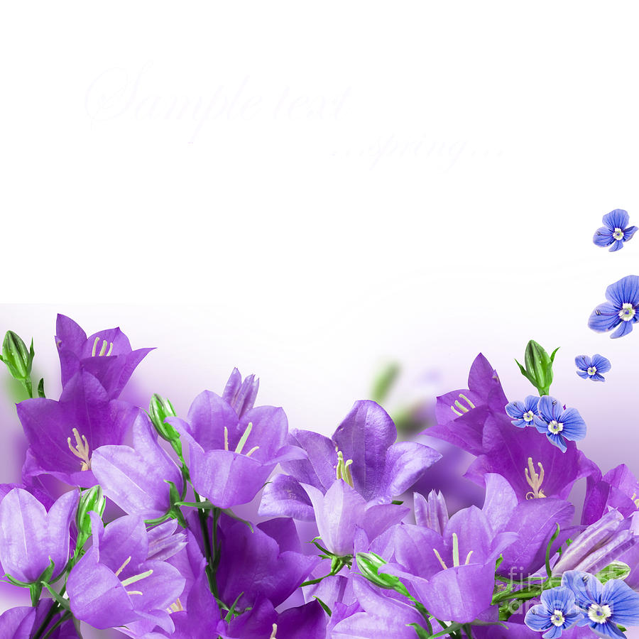 Beautiful Purple Flower Frames Photograph by Boon Mee