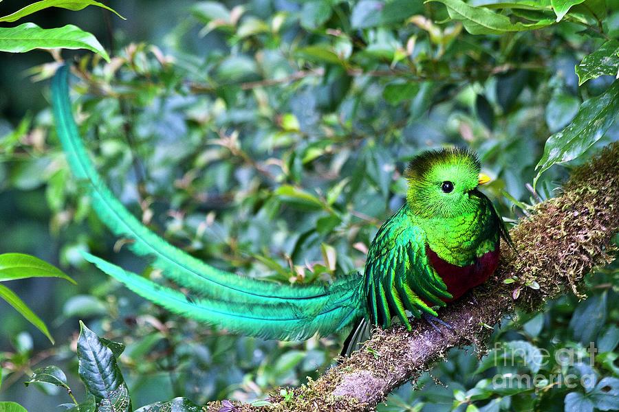Bird Photograph - Beautiful Quetzal 3 by Heiko Koehrer-Wagner