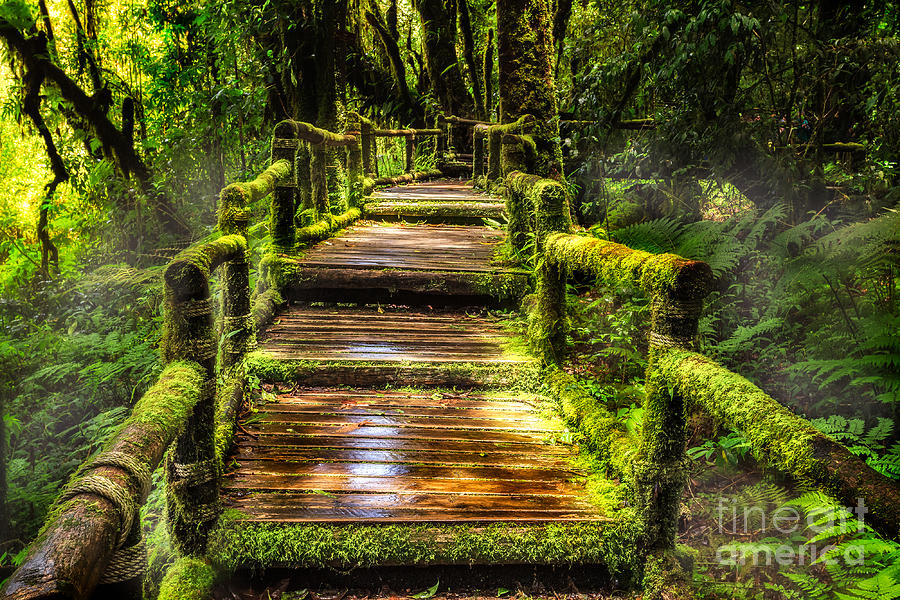Beautiful Rain Forest At Ang Ka Nature Trail Photograph By Anek Suwannaphoom