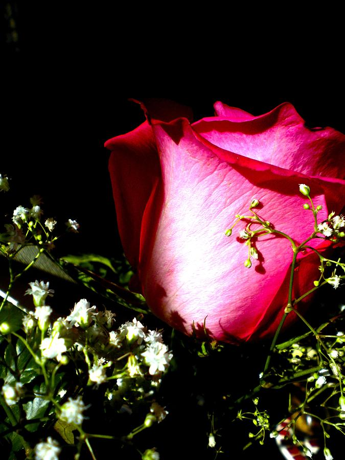 Rose Photograph - Beautiful Rose by Elizabeth Fredette