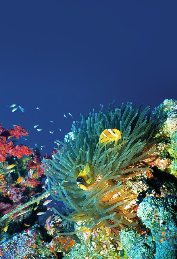 Beautiful Sea Life Photograph by Ultramarinfoto
