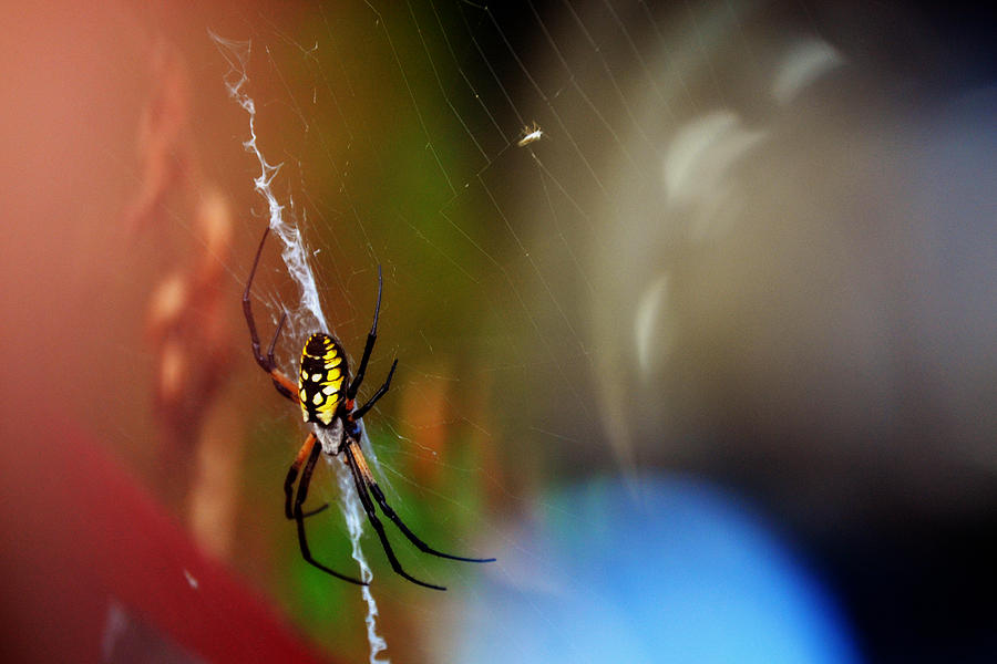 Spider Photograph - Beautiful Spider by Adam LeCroy