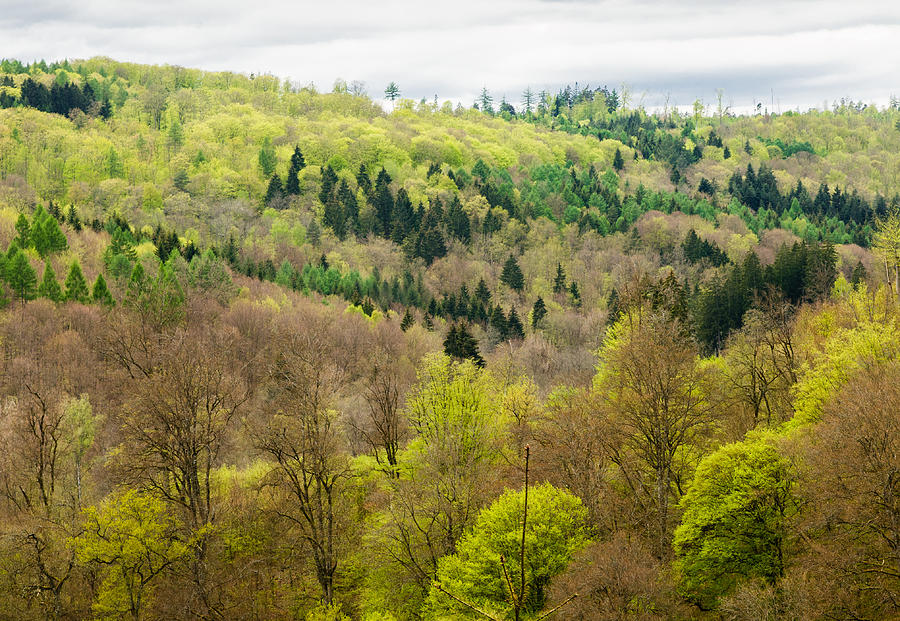 Beautiful Spring Forest - Many Shades Of Green Photograph