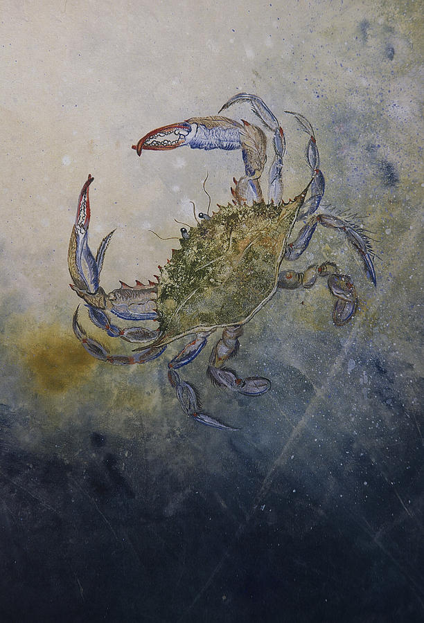 Crab Mixed Media - Beautiful Swimmer by Nancy Gorr