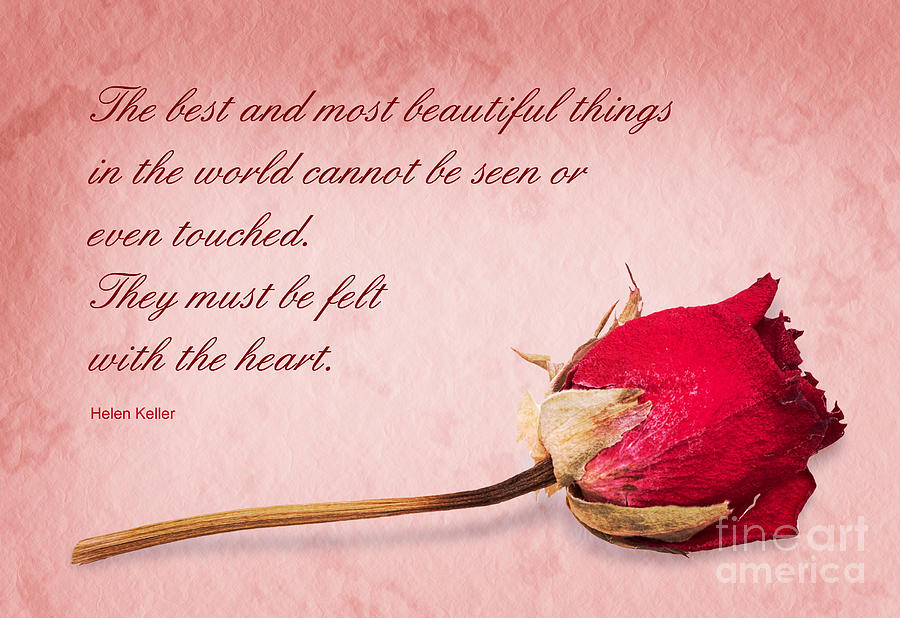 Rose Photograph - Beautiful things by Judith Flacke