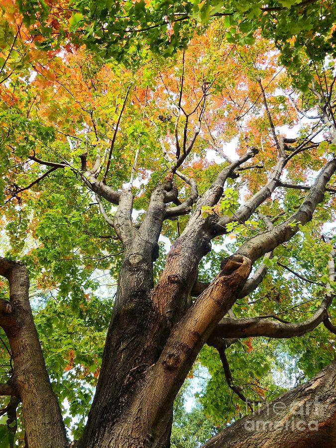 Nyc Photograph - Beautiful Tree In Central Park by Angie Gonzalez