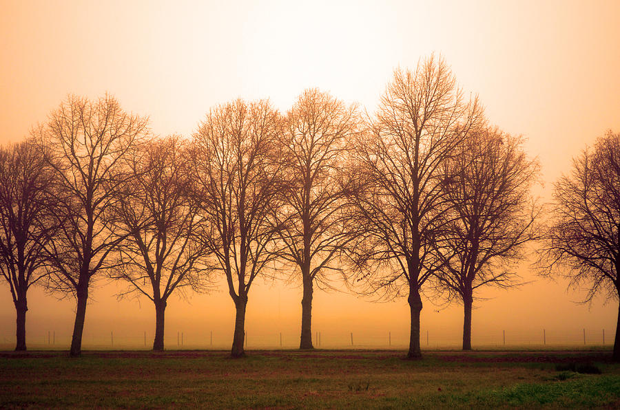 Trees Photograph - Beautiful Trees In The Fall by Tommytechno Sweden
