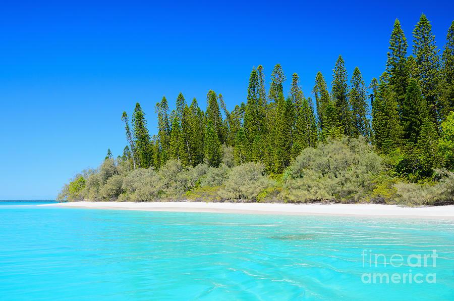 Beautiful Photograph - Beautiful Tropical Sea - Beautiful Beach - Beautiful Trees - Beautiful Sky by David Hill