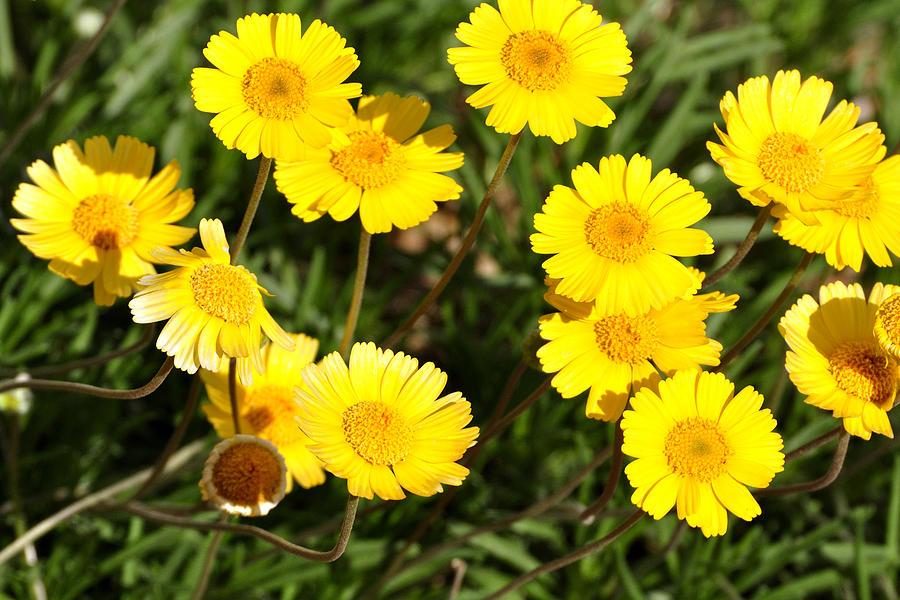 Beautiful Weeds 32655 Photograph