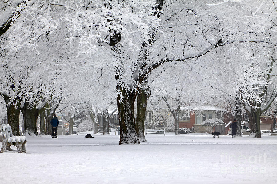 Winter Photograph - Beautiful Winter Park by Charline Xia