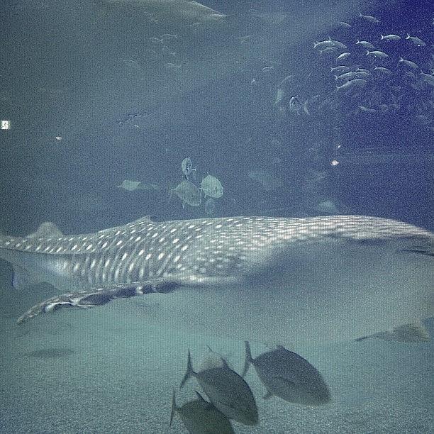 Beautiful Photograph - #beautiful#fish by Tokyo Sanpopo