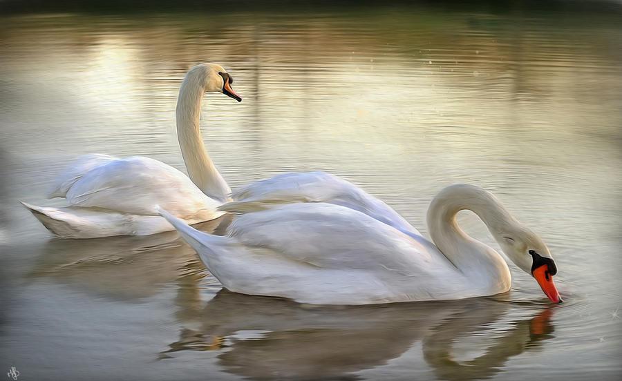 Swans Digital Art - Beauty And Grace by Hazel Billingsley