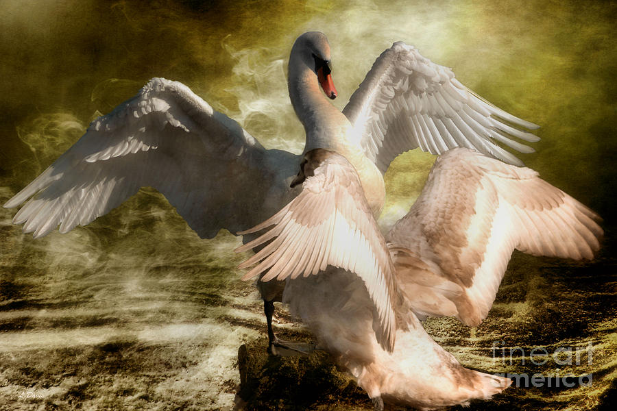 Swans Photograph - Beauty And Power 2 by Wobblymol Davis