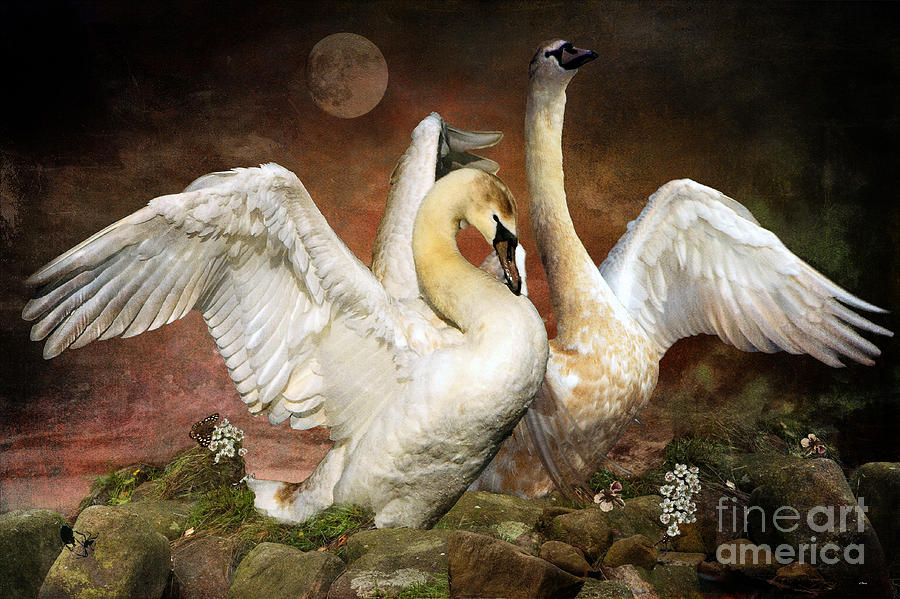 Swans Photograph - Beauty And Power by Wobblymol Davis
