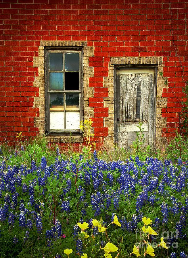 Door Photograph - Beauty and the Door - Texas Bluebonnets wildflowers landscape door flowers by Jon Holiday