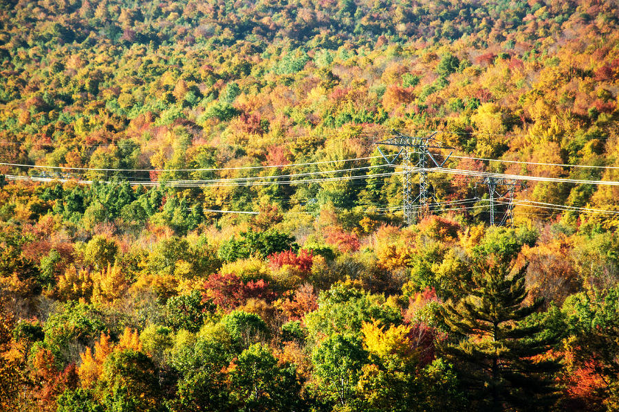 Trees Photograph - Beauty And The Grid by Sherman Perry