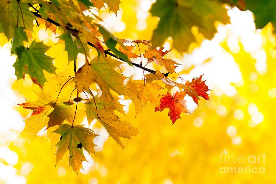 Beauty Photograph - beauty Autumn Leaves by Boon Mee