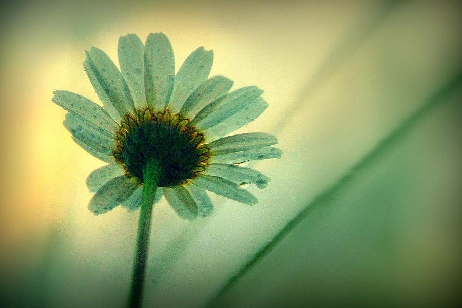 Flowers Photograph - Beauty Beneath.. by Al  Swasey