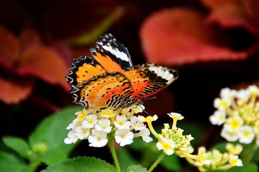 Butterfly Photograph - Beauty Deepens by David Earl Johnson