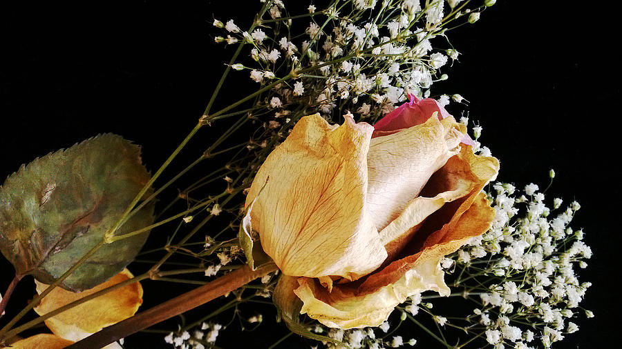 Rose Photograph - Beauty In Babys Breath by Tanya Jacobson-Smith