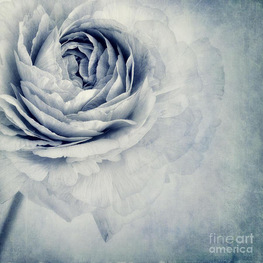 Buttercup Photograph - Beauty In Blue by Priska Wettstein