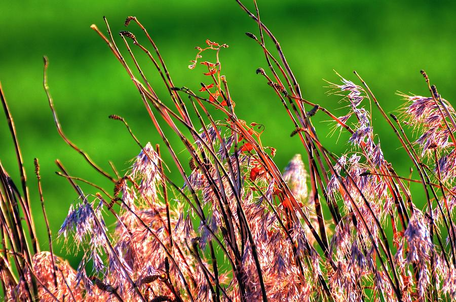 Beauty In The Ditch 15894 Photograph
