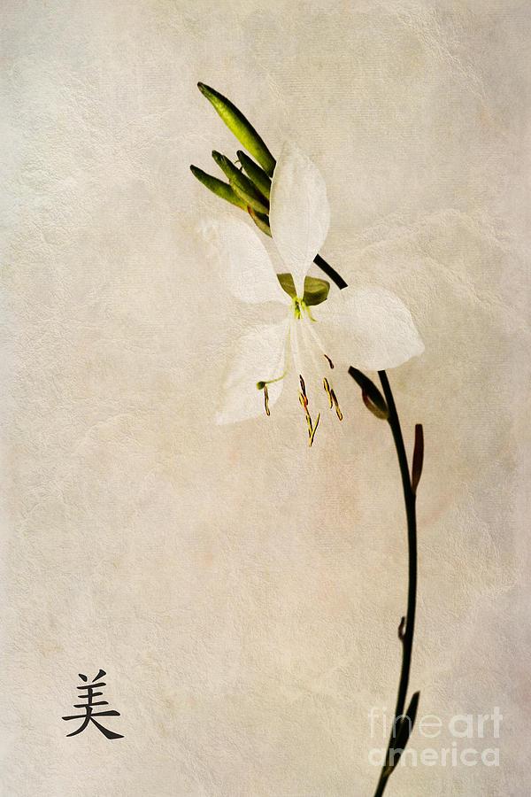 Beauty Symbol Photograph - Beauty by John Edwards