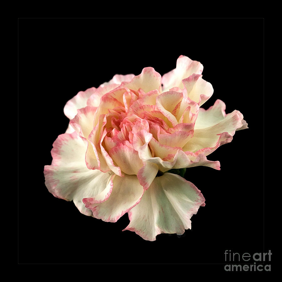Flower Photograph - Beauty by Liz  Alderdice