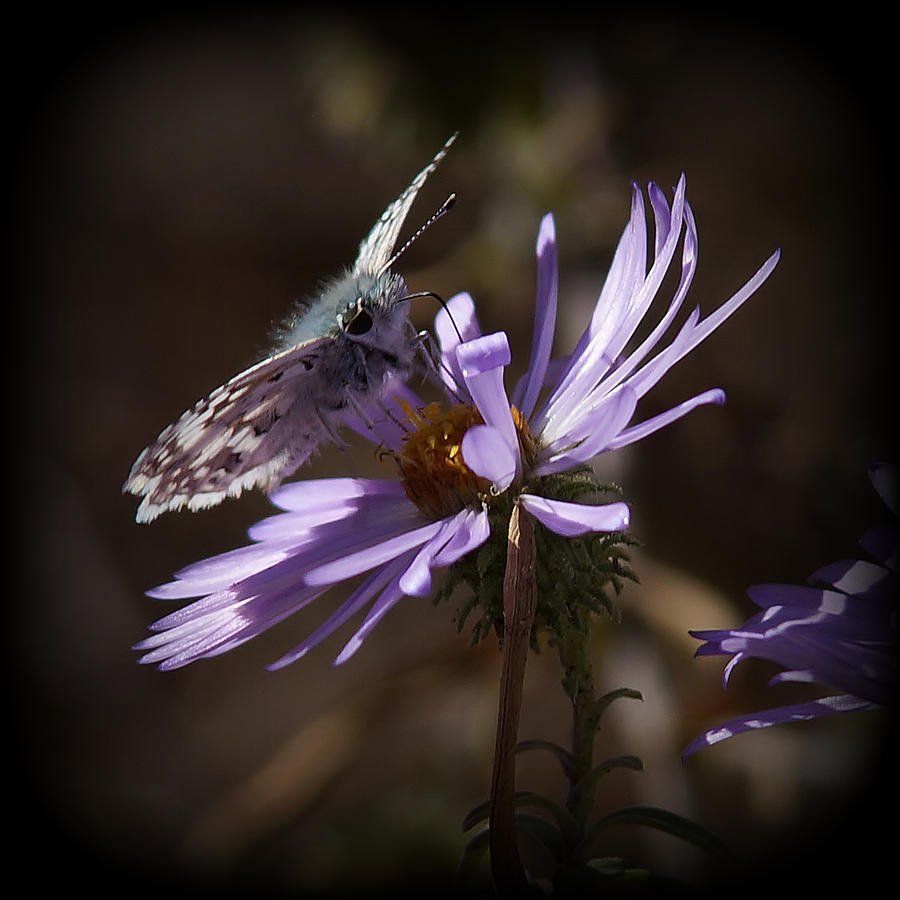 Moths Photograph - Beauty Of Nature by Ernie Echols