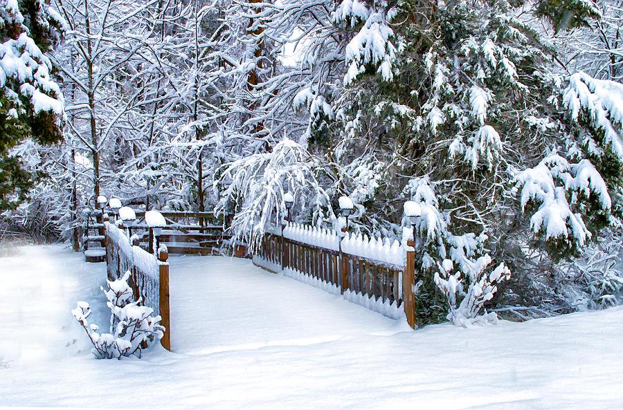 Winter Photograph - Beauty Of Winter by Kathy Jennings