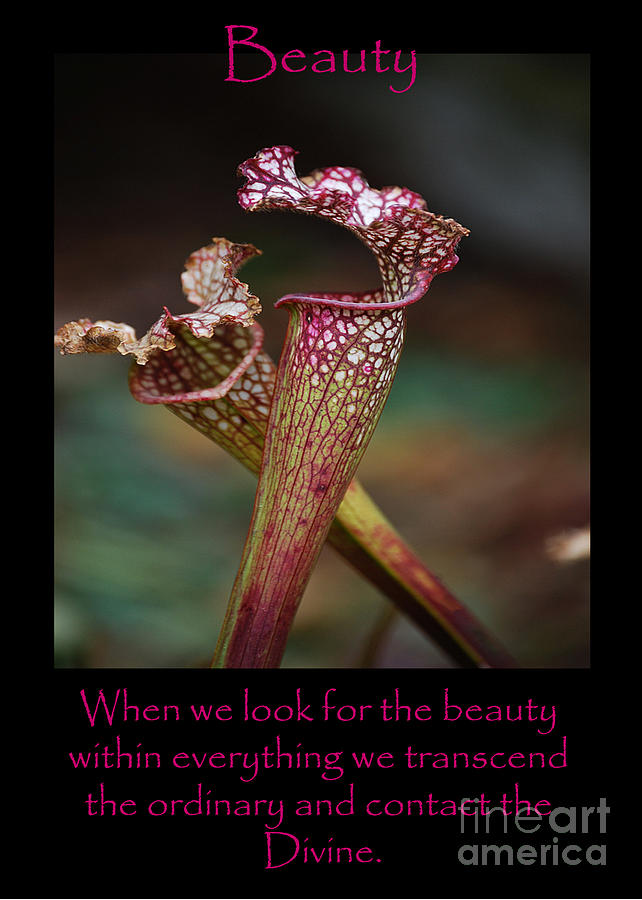 Beauty Pitcher Plants by Victoria Page