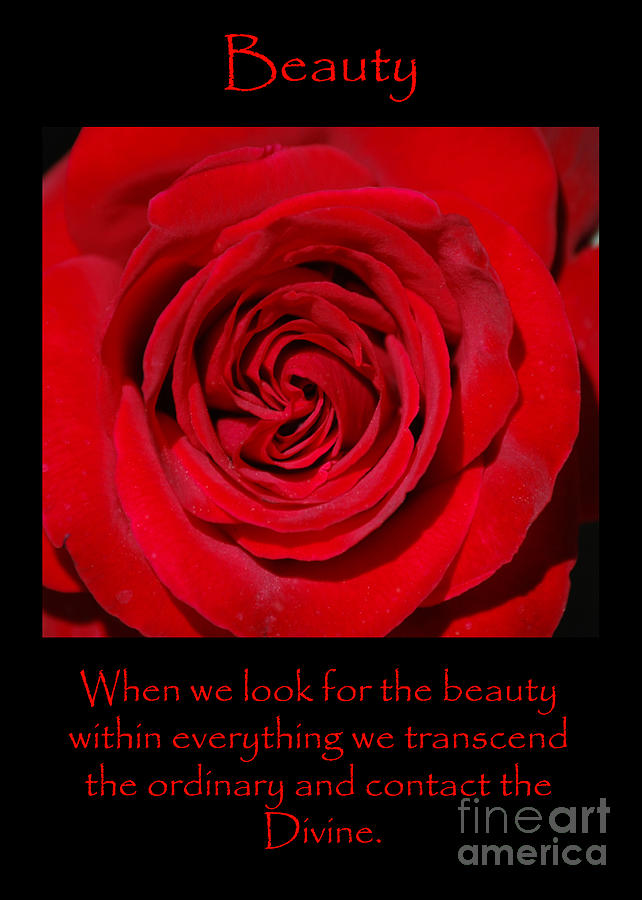 Beauty Red Rose by Victoria Page