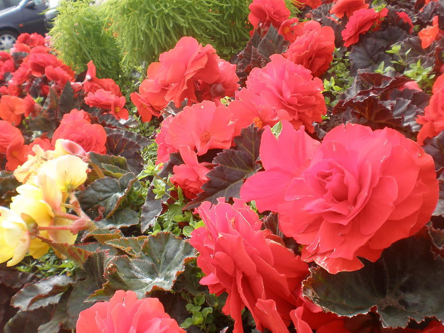 Flowers Photograph - Beauty by Sonya Ragyovska