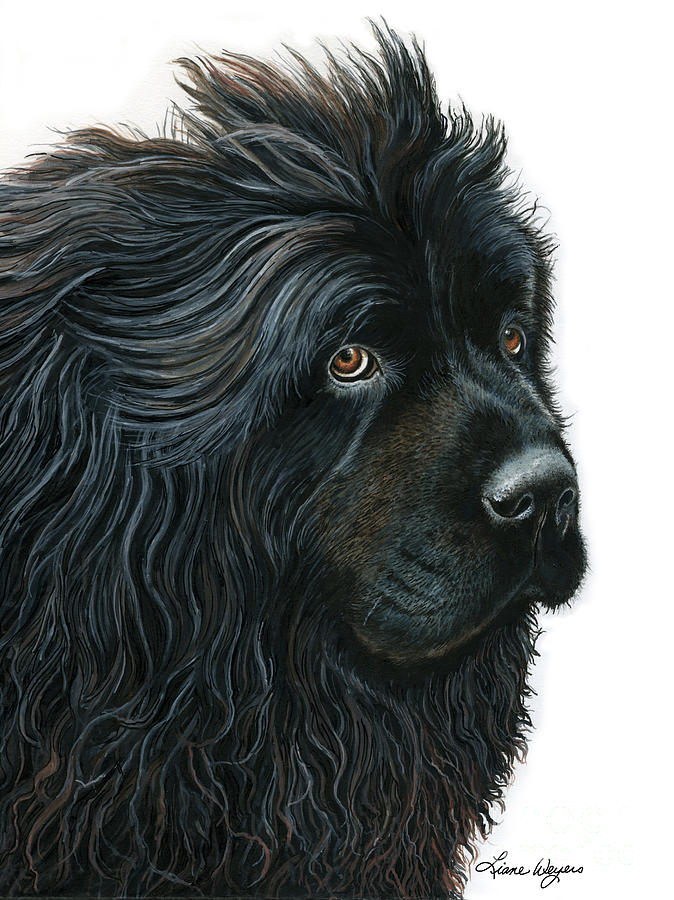 Newfoundland Dog Painting - Beauty Without Vanity by Liane Weyers
