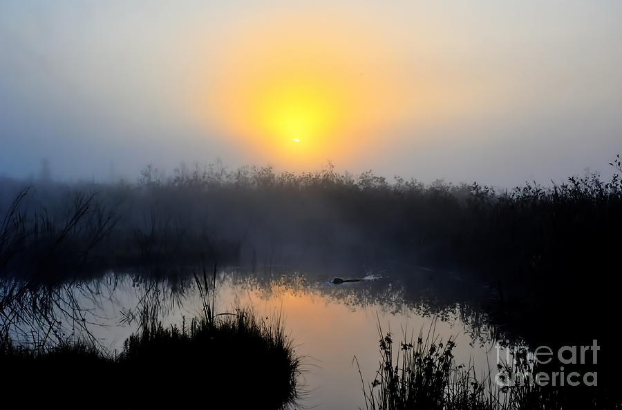 Beaver Photograph - Beaver At Beaver Dam In Morning by Dan Friend