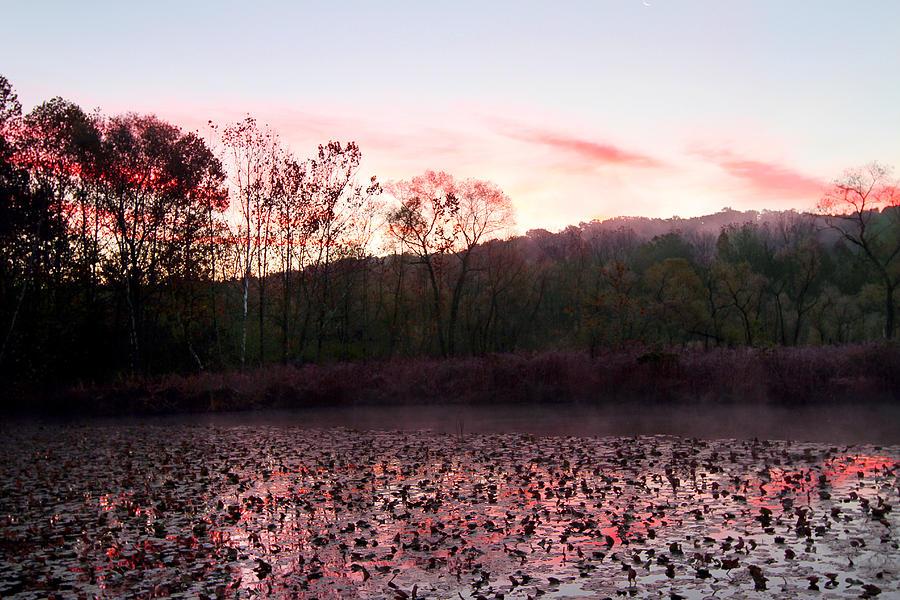 Pond Photograph - Beaver Marsh by David Yunker