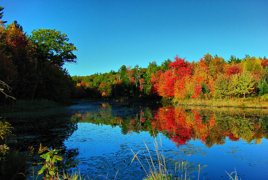 Hdr Photograph - Beaver Pond Foliage by RockyBranch Dreams