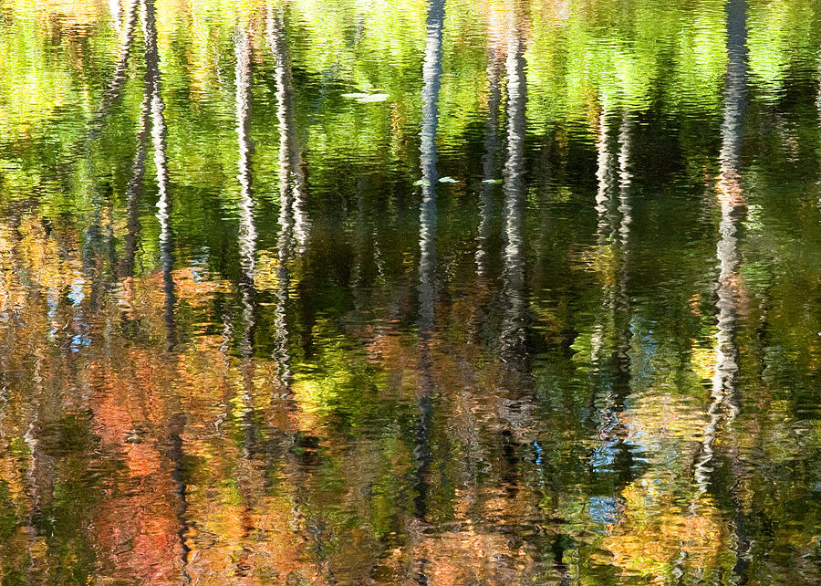 Beaver Pond Reflections 1 Gatineau Park Quebec by Rob Huntley