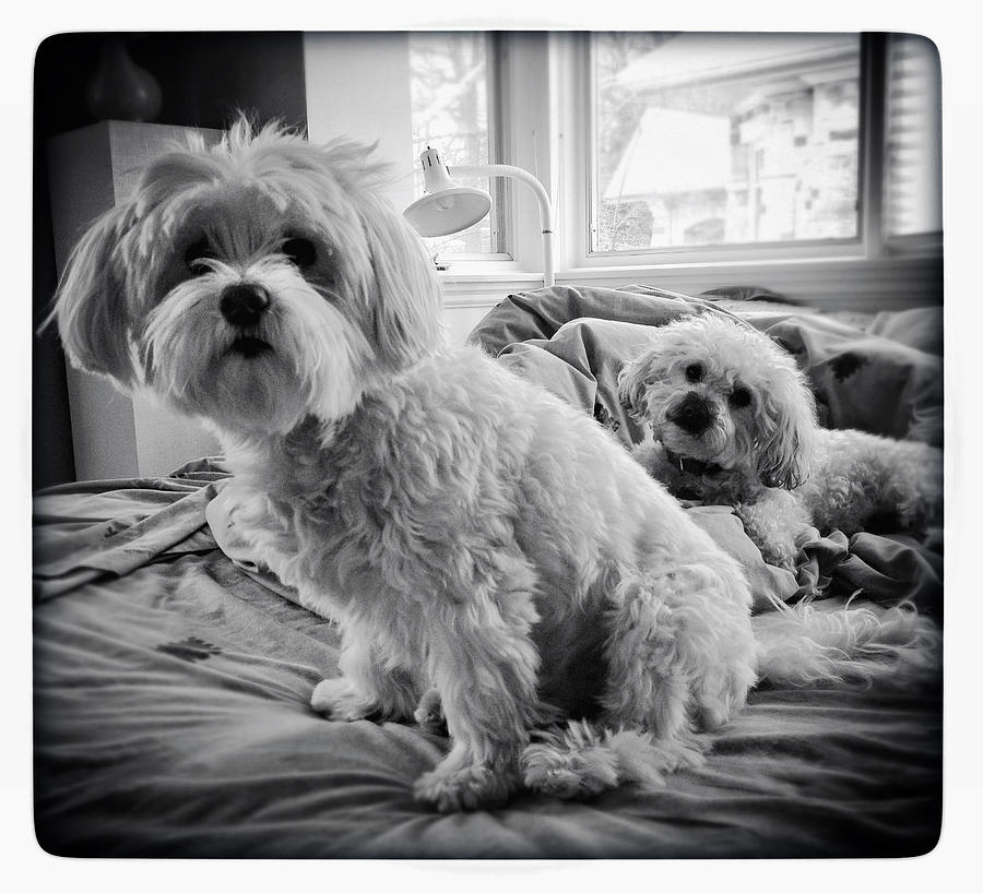 Dogs Photograph - Bed Buddies by Natasha Marco