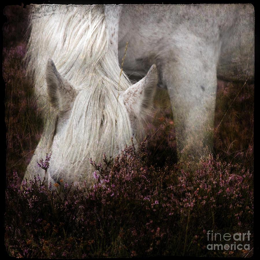 Pony Photograph - Bed Of Heather by Angel  Tarantella