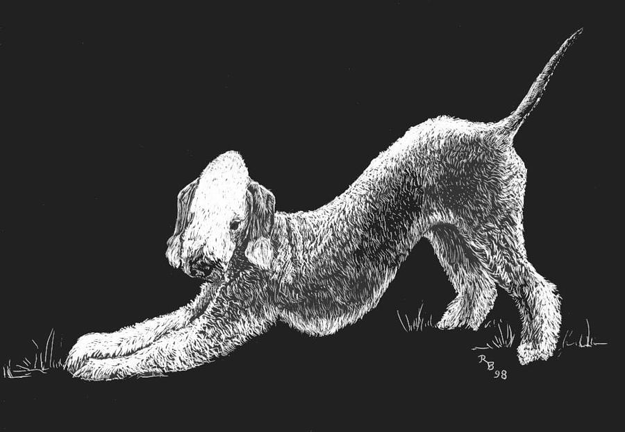 Bedlington Terrier Drawing - Bedlington Terrier by Rachel Hames