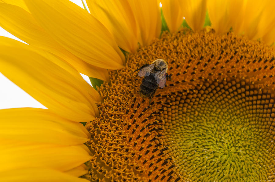New Jersey Photograph - Bee Business by Kristopher Schoenleber