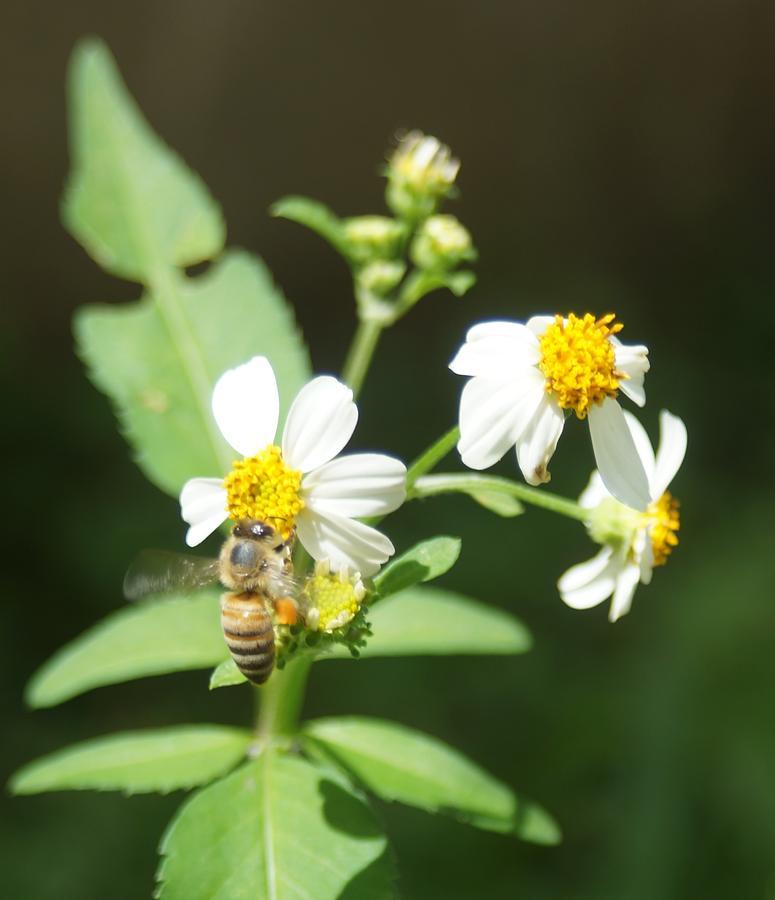 Bee Photograph - Bee-flower Pollen by Miguel Hernandez