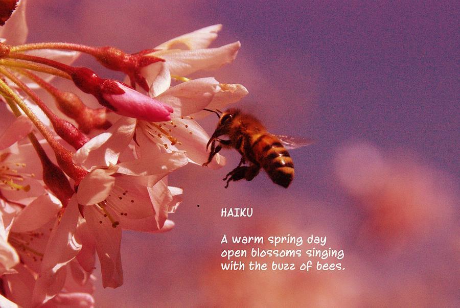 Bees Photograph - Bee Haiku by Jeff Swan