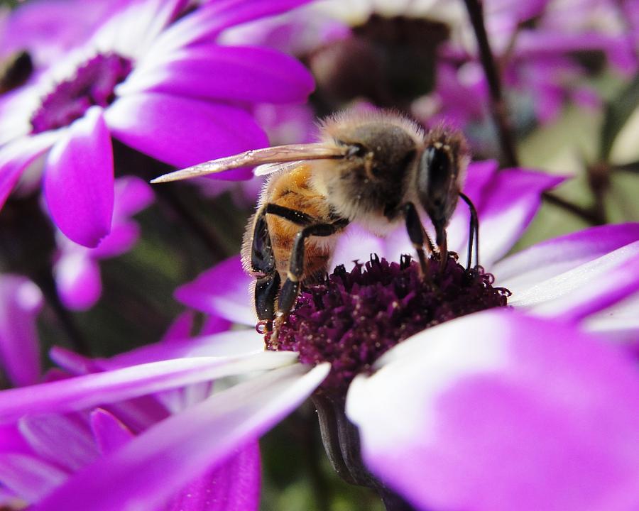 Bee Photograph - Bee Happy by Norma Brock