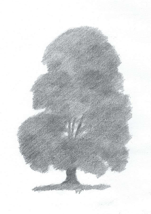 Drawings Painting - Beech Tree Drawing Number Four by Alan Daysh